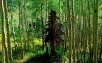 Лес  -  тема  4